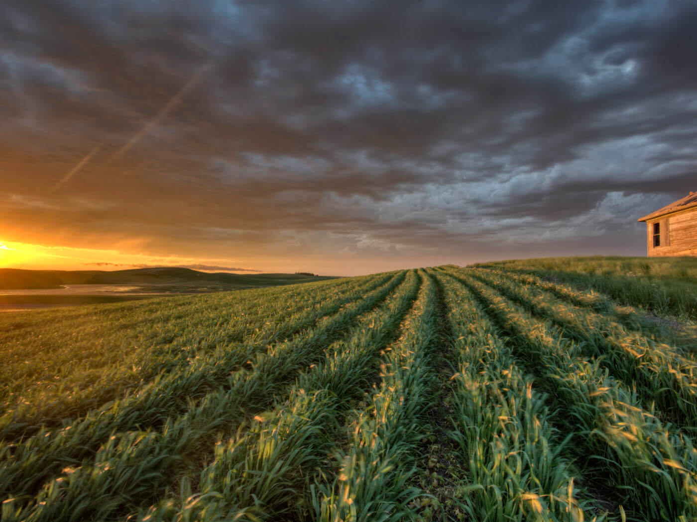 sunset and durum wheat crop storm clouds