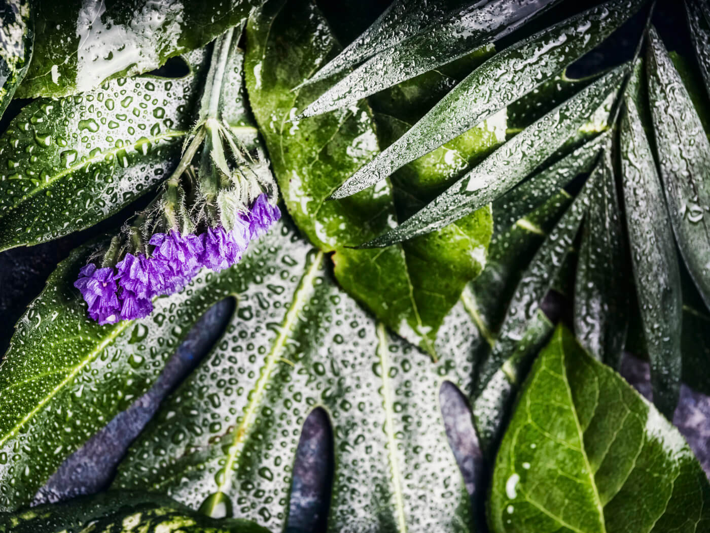 Layout of green tropical leaves with purple flowers and water drops, top view