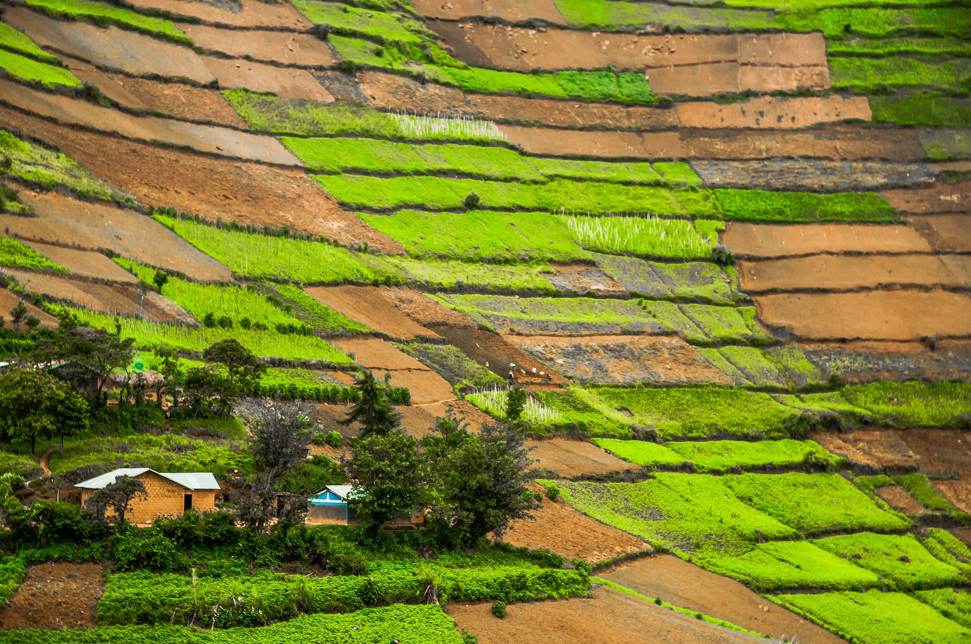 The typpical landscape of the Kabale District in Southern Uganda with homesteads within worked plots of land against the fertile hills from below to right at the top of the hills.